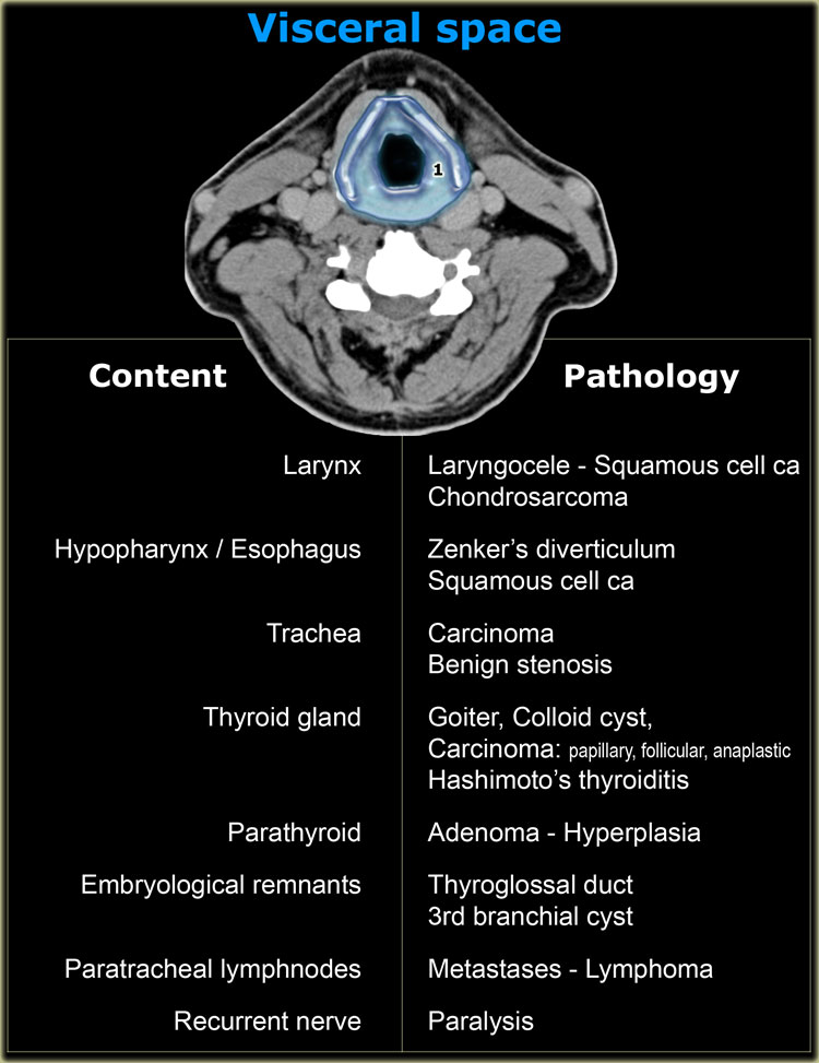 The Radiology Assistant Anatomy And Pathology